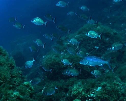 diving-mallorca-07